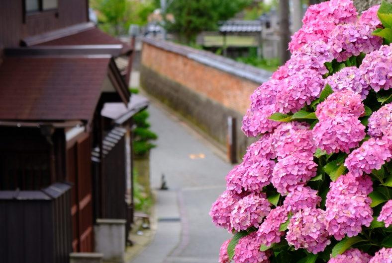 京町通り12