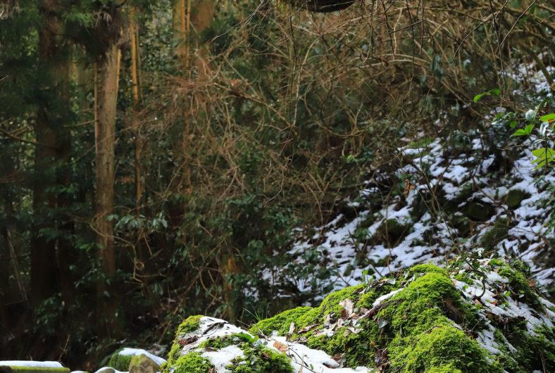 鍋倉の滝02