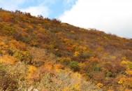 紅葉 ドンデン山