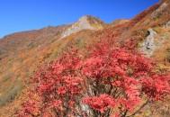 紅葉 金北山