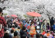 おいらん道中in桜祭り
