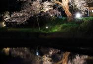 法乗坊の種蒔き桜02