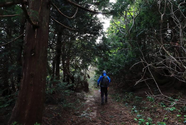 石花~ドンデン山05