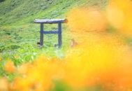 大野亀07