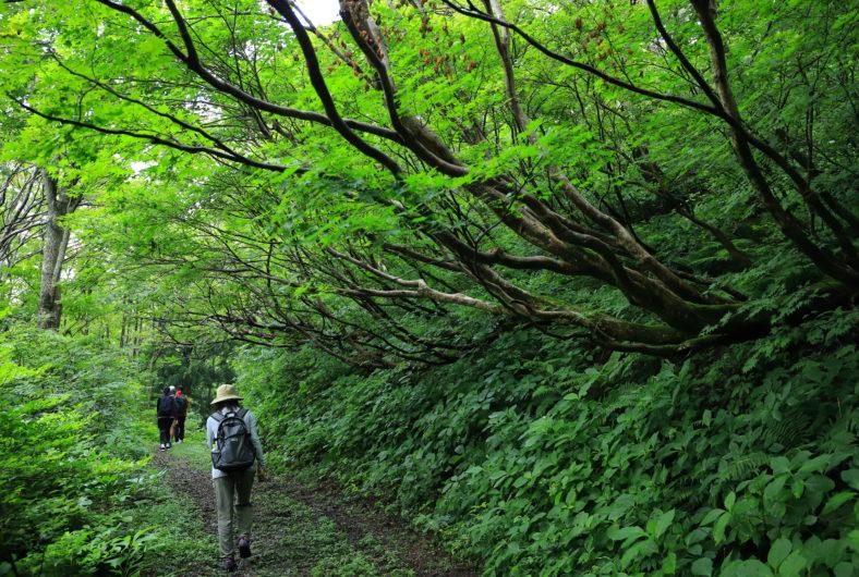 ドンデン山02