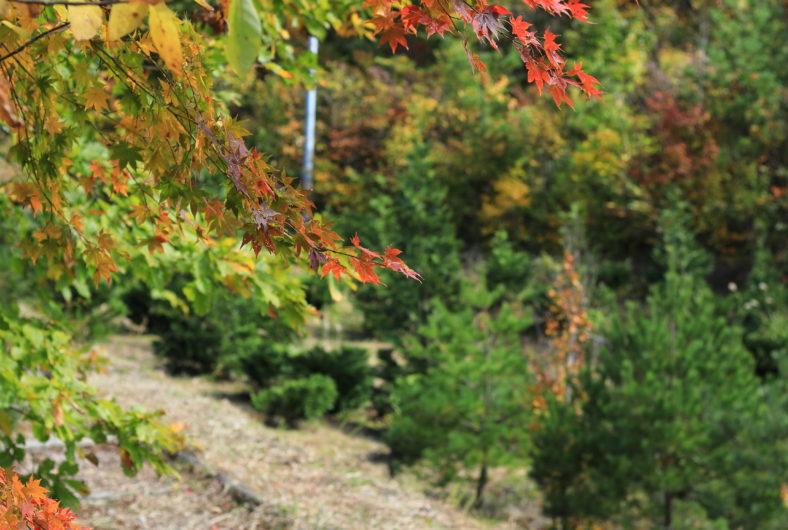 紅葉 紅葉山05