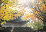 紅葉 慶宮寺 八祖堂 01